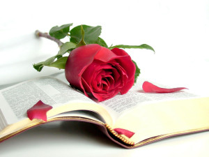 bible-and-rose